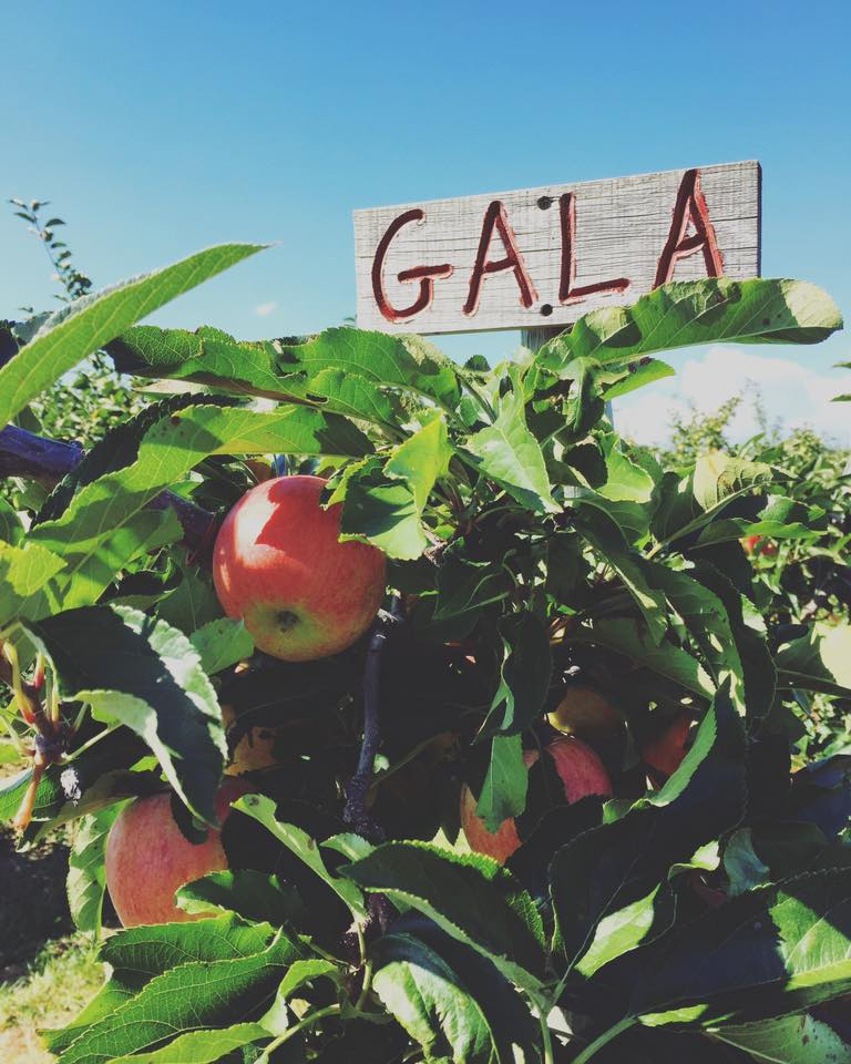 close up of apple bushel with wooden sign on top on a sunny day