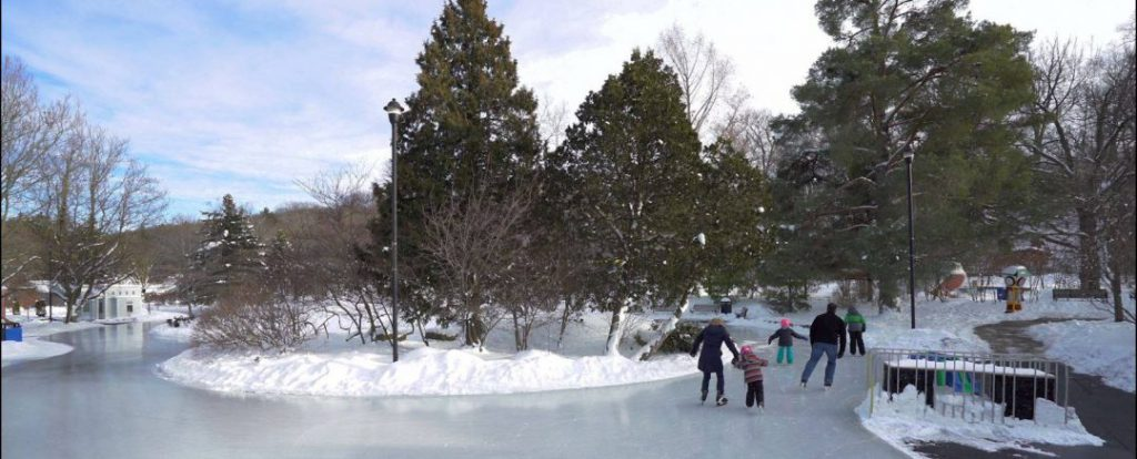 panoramic view of large freestyle skating trail with skaters to the right and island of trees in middle on clear winter day