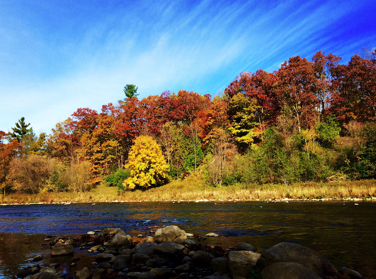 forest in the fall by river with large rocks in it
