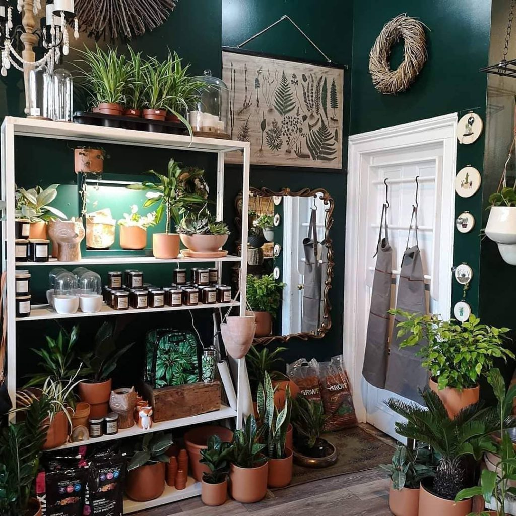 interior of store corner view of product shelves with various plants and pots in front of a dark green wall