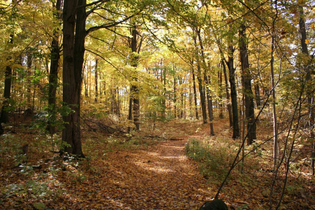 forest in the fall with leaves covering trail