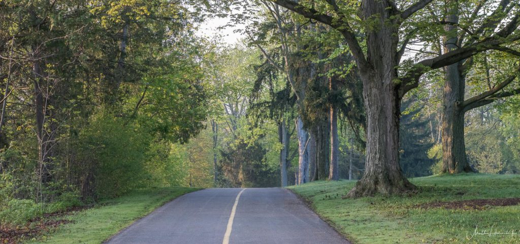 paved bike path in park surrounded by trees on either side