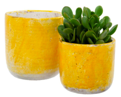 set of two small yellow pots one empty and the other with a succulent inside