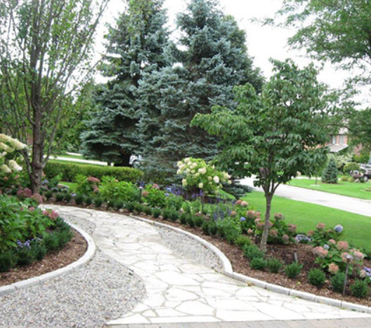 front lawn walkway surrounded by small shrubs and flowers with trees in the background