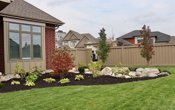 front of house garden bed with black dyed mulch with various trees, shrubs, and rock features throughout in front of a fresh cut lawn
