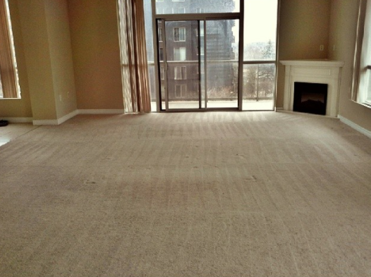 empty living room with lines on the carpet representing a fresh steam