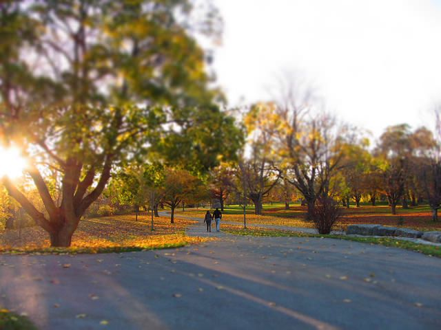 two people walking on walking path in fall during a sunset
